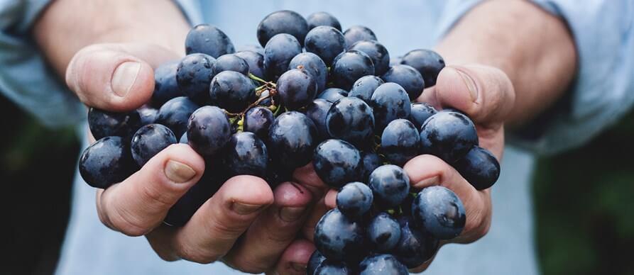 grožđe u ruci